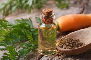 carrot seed essential oil bottle
