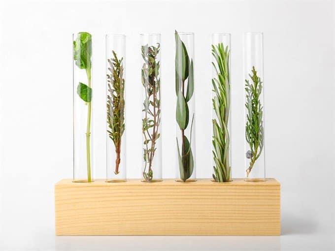 botanical plants in test tubes