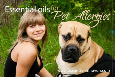 How to use essential oils to help with pet allergies