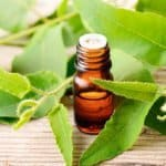 eucalyptus essential oil for ticks