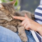Which Essential Oils are Toxic to Cats? Which Ones Are Safe? (A Complete Guide)