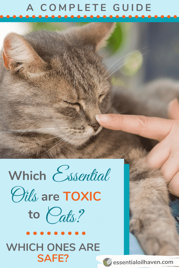 Which Essential Oils Are Toxic To Cats Which Ones Are