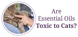 Are Essential Oils Toxic to Cats?
