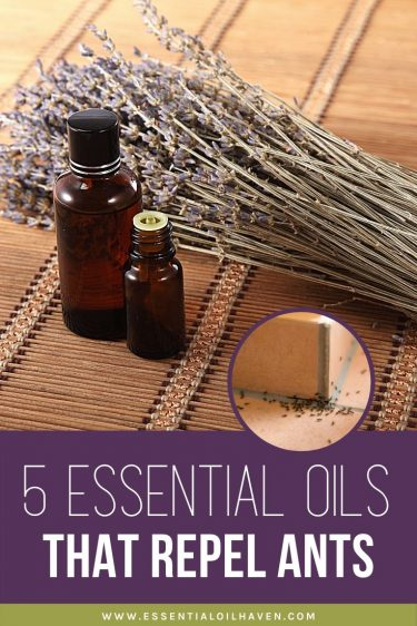 5 Essential Oils for Ants