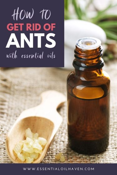 Essential Oils to Get Rid of Ants